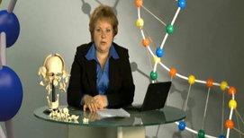 Скелет. Строение и состав костей