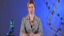 Регуляция транскрипции и трансляция в клетке
