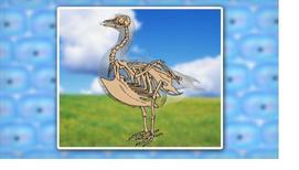 Класс птицы. Отряд Пингвинообразные