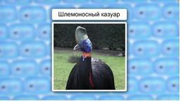 Класс Птицы. Отряды Страусооборазные, Нандуобразные, Казуарообразные, Гусеобразные