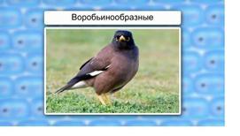 Класс Птицы. Отряды Воробьинообразные, Голенастые