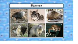 Класс млекопитающие. Отряды Грызуны и Зайцеобразные