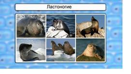 Класс Млекопитающие.Китообразные, Ластоногие, Хоботные, Хищные.
