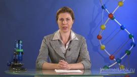 Сходства и различия в строении клеток растений, животных, грибов